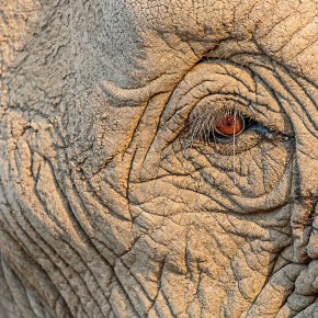 Video Moment, A Look Back : Through Their Eyes, Stop Elephant Poaching Now