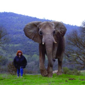 Remembering Elephant Conservationist Pat Derby of PAWS on 7 June, Her Birthday : Great Elephant People
