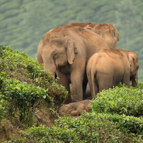 """Countdown to World Elephant Day, 12 August 2020,  """"Elevents"""" For Everyone!"""