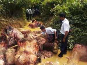 Image Courtesy of: WWF