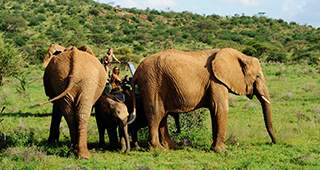 Media, Article, BBC, BBC wildlife, magazine, article, BBC wildlife magazine article, This Wild Life, reality show, Samburu National Reserve, Elephant Watch Camp, Elephant Watch Portfolio, Nairobi, Kenya, wild safaris, wildlife safaris, conservation