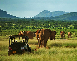 Elephant Watch Camp, Samburu National Reserve, wildlife, wild safaris, wildlife safaris, conservation, Elephant Watch Portfolio, Nairobi, Kenya, experience, activities, game drives, safari, safari vehicle