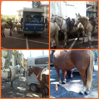 bikaviadal bikafuttatás - lovaké az egyik főszerep
