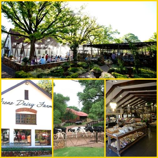Élet Dél-Afrikában: Irene Dairy Farm
