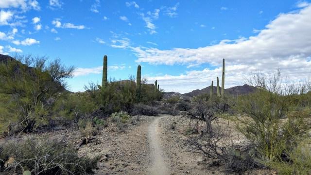 Tucson Mountain Park Run