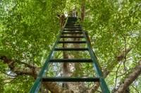 Evangelio apc escalera al árbol