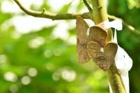 Evangelio apc corazones en árbol