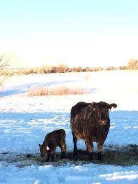 A frigid but beautiful morning at Cedar Mesa Ranch!