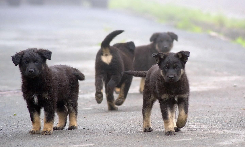 Puppies walking - Turkey Feeds Stray Animals