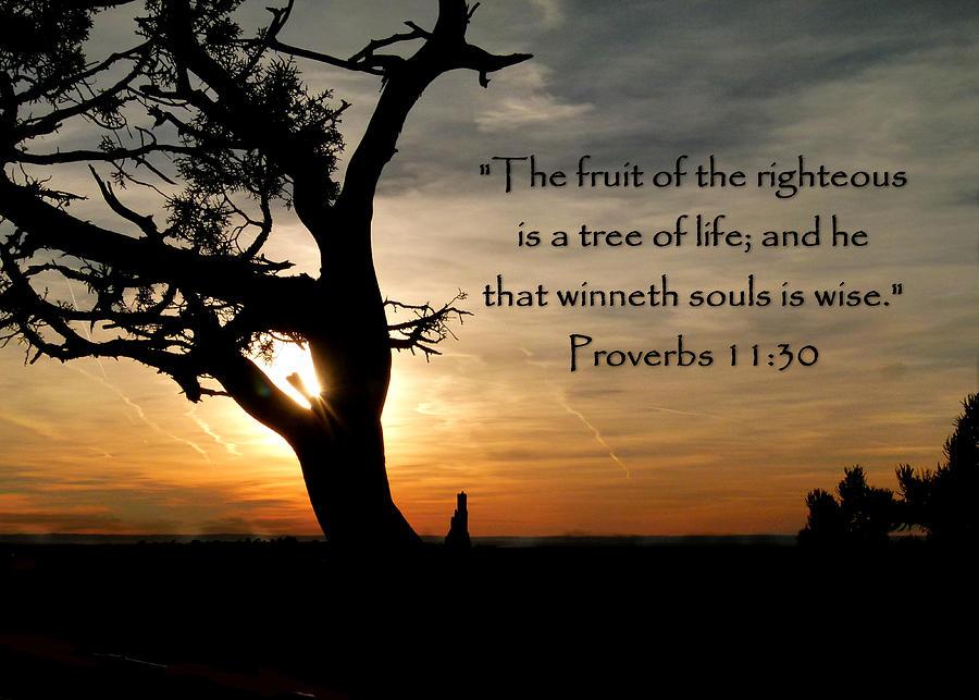 Proverbs 11  eleventeengreencom