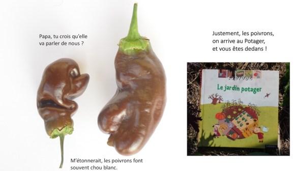 Livre kididoc Le jardin potager