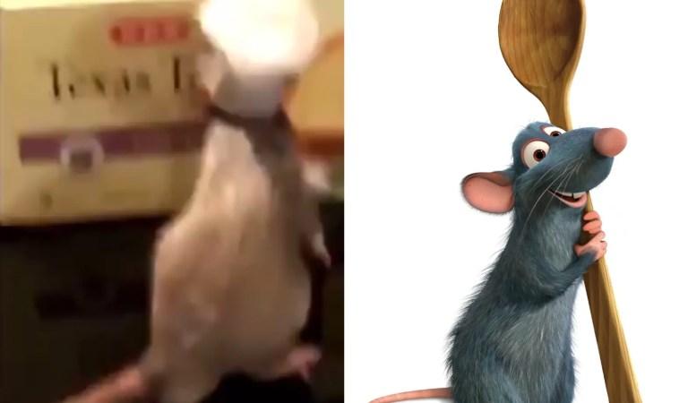 ¿Otro live-action de Disney? Pillan a una rata «cocinando» al mejor estilo de Ratatouille