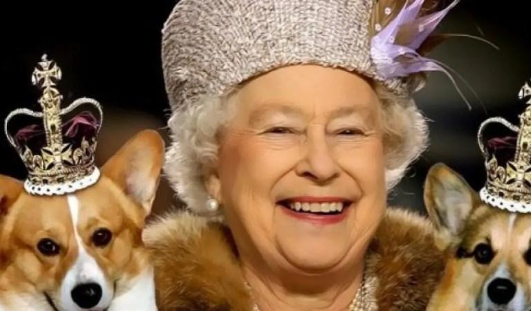 La reina Isabel II incursiona en la moda con una línea de productos para perros 👑🐶