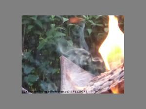 Feuerelfe an der Feuerschale