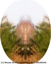Gespiegeltes Bild der vorherigen Aufnahme