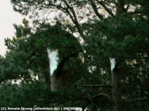 Lichtelfe an einem Baum