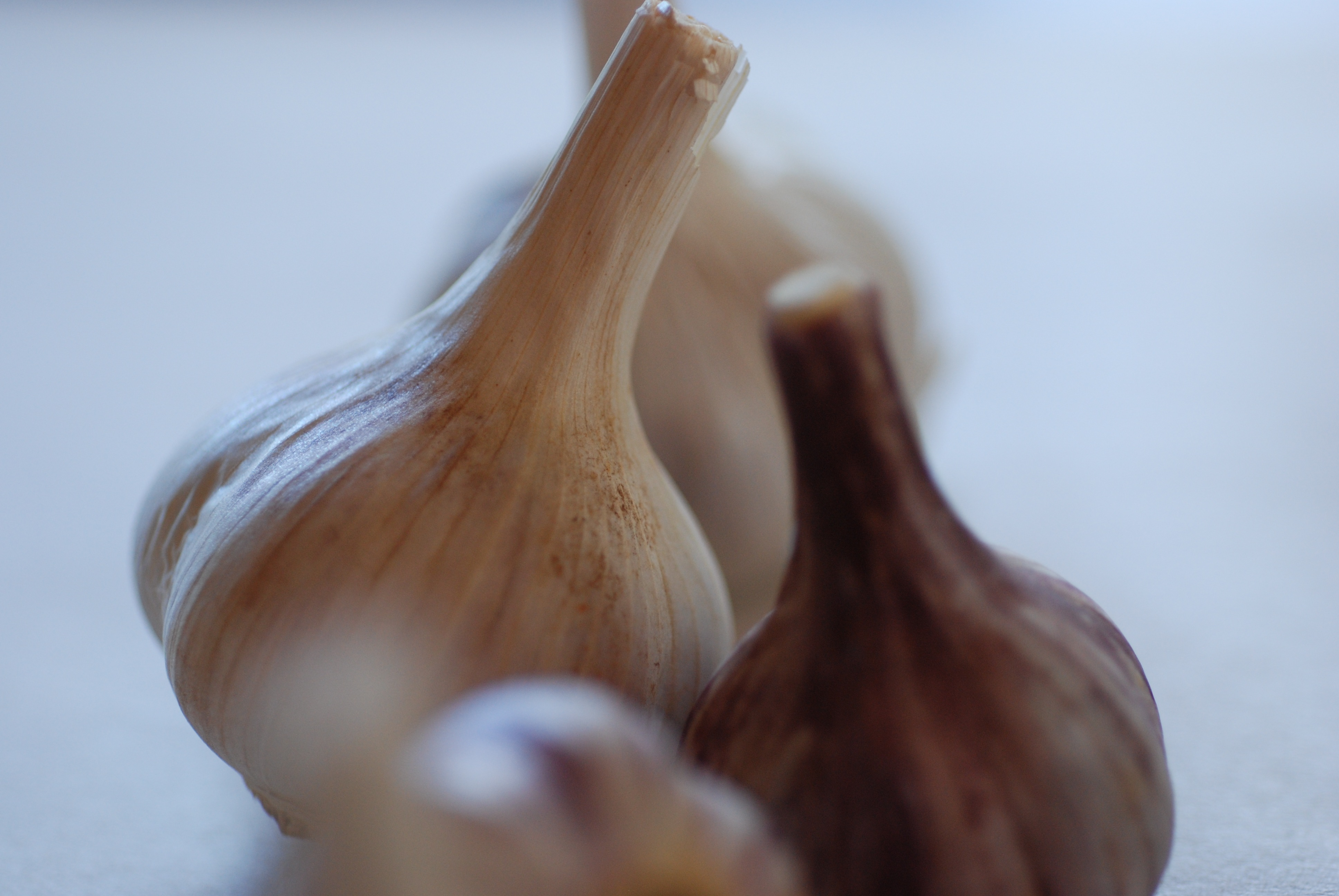 Italian Purple garlic