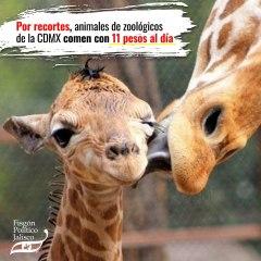Por recortes, animales de zoológicos de la CDMX comen con 11 pesos al día