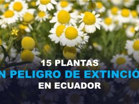 15 Plantas en peligro de Extinción en Ecuador