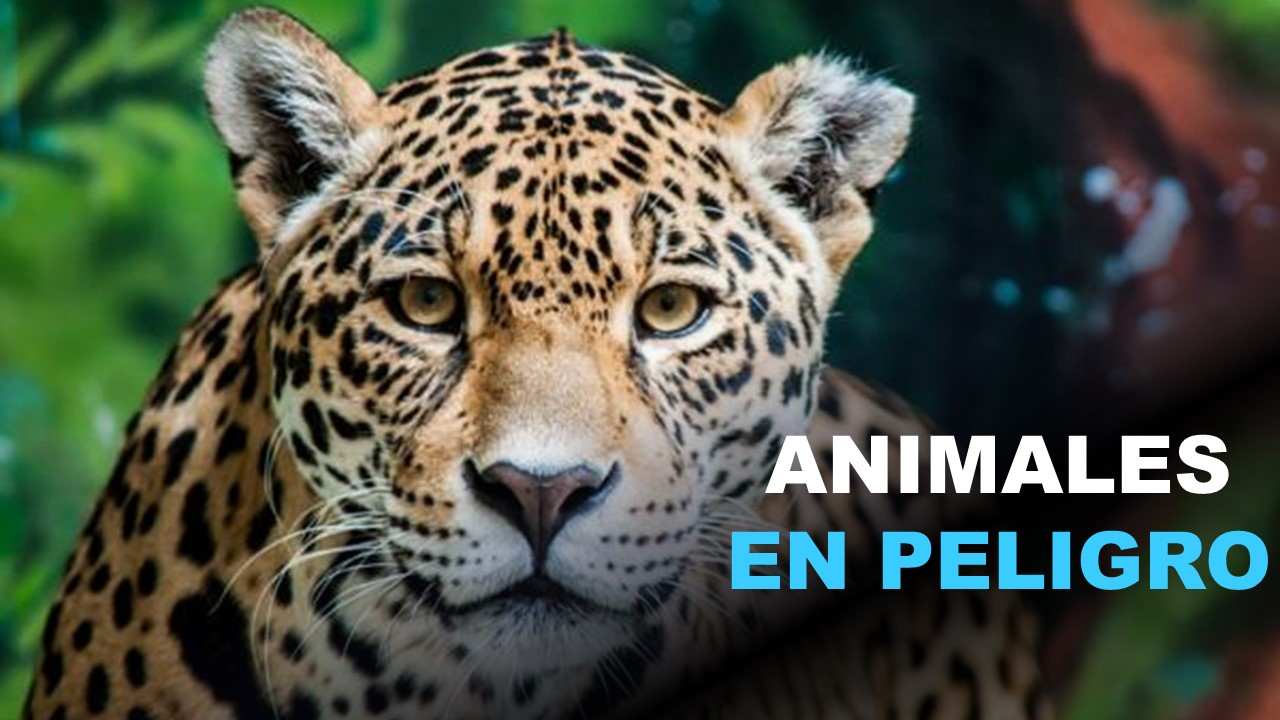 Animales en Peligro de Extinción en Ecuador