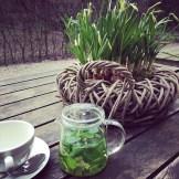 Green livin' today #freshmintteainthegardenmood #loveamstersun