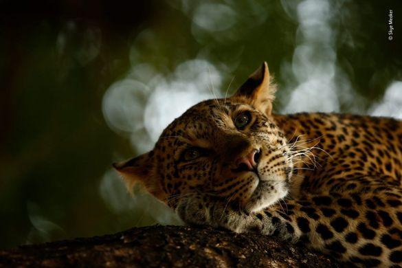Wildlife Photographer: Un paseo por la naturaleza en el centro de Madrid