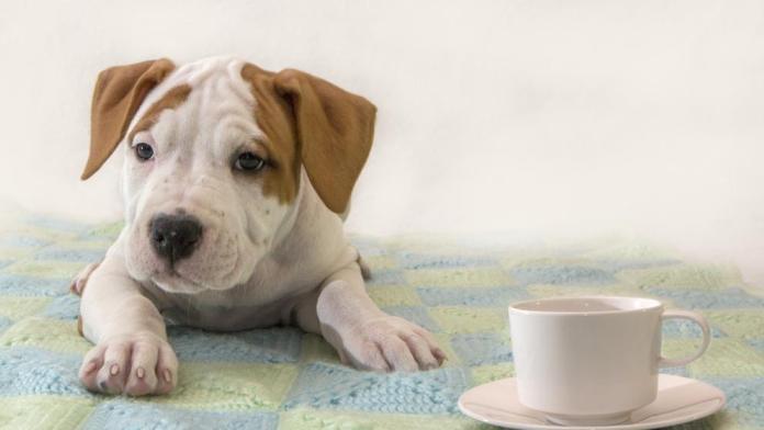 La primera cafetería con perros en adopción abre sus puertas en Madrid
