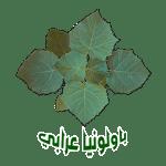 paulownia oraby logo 500 شجرة الباولونيا بولونيا عرابي