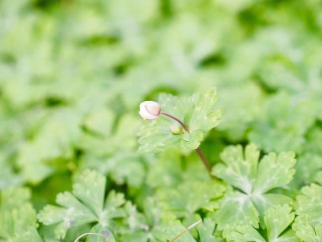 自然観察園 春の草樹花5-13