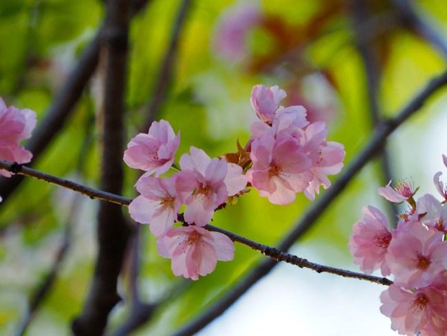 奥州里桜3