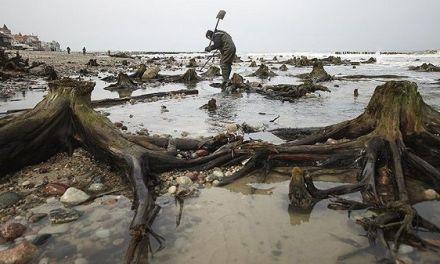 Emerge un bosque fantasma de las aguas del mar Báltico ruso