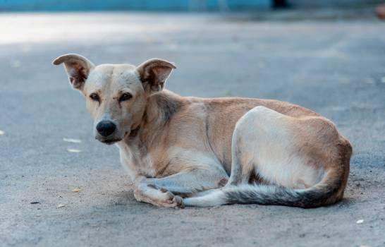 El poco control de los perros callejeros