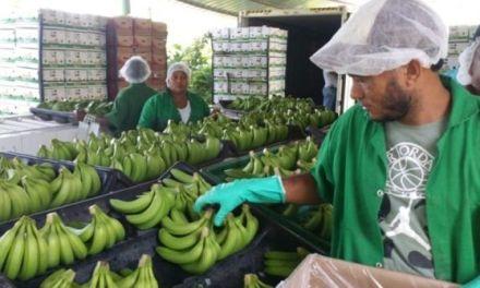 Dice productores trabajan para cumplir regulaciones otros países