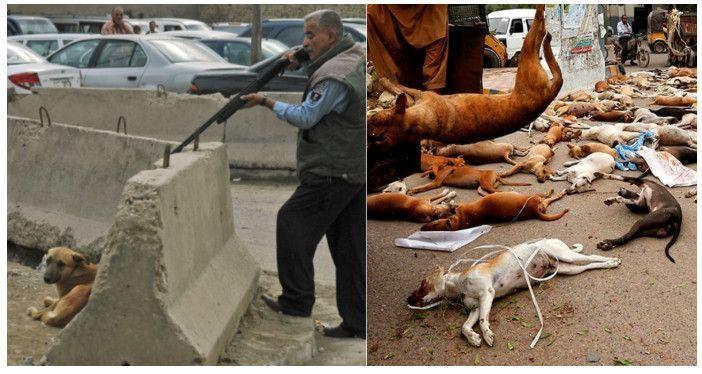 Disparan y matan a miles de perros sin hogar porque 'buscan comida' — Exterminaron 58.000 en un año
