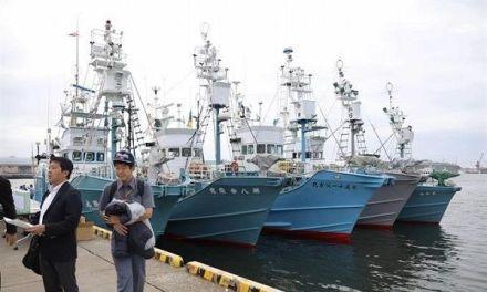 Las autoridades de Japón anunciaron que sus barcos capturarán 227 ballenas con fines comerciales