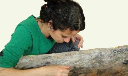 Estudian un yacimiento de más de 5.000 años hallado en las aguas del lago Bracciano en Roma