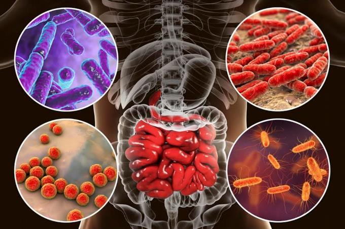 Los científicos identifican más de 140,000 especies de virus en el intestino humano