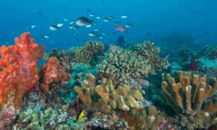 Los océanos están más amenazados que nunca, advierte la Organización Meteorológica Mundial