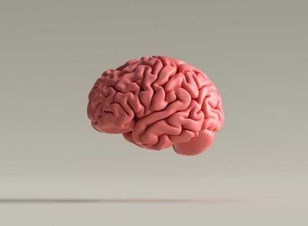 Científicos cultivan microtejido cerebral con un chip impreso en 3D