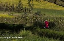 Cajamarca, la jalca dorada