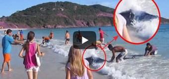 Un Turista Estaba Filmando En La Playa Cuando ESTO Salió Del Agua