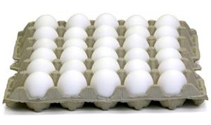 سعر البيض الابيض اليوم، بورصة البيض المصرية