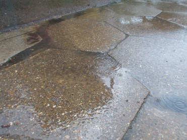 Puddles, puddles, puddles from the rain!