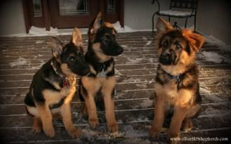 Beckett, Brody, & Max