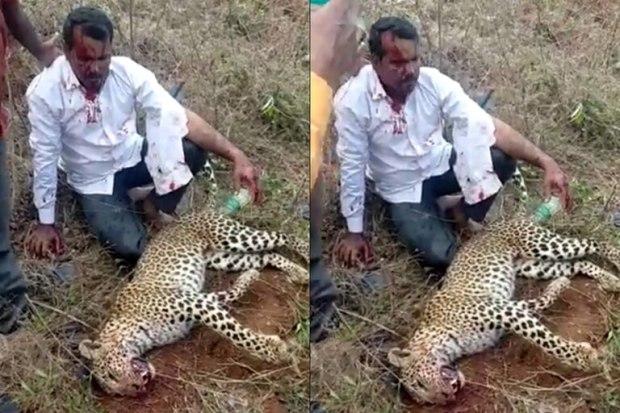 Hombre pelea con un leopardo
