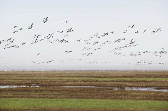 vol-d-oiseaux