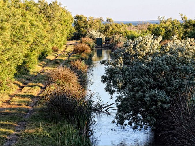 parc-regional-de-camargue-canal-photo-bibendum84