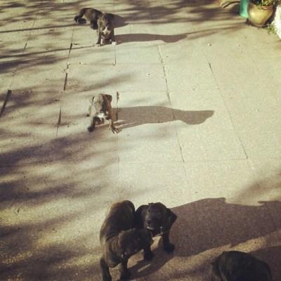 [20] recibimiento cariñoso de los cachorros