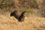 """Un cóndor andino fue rescatado y liberado en la Reserva Natural """"Las Higueritas"""""""