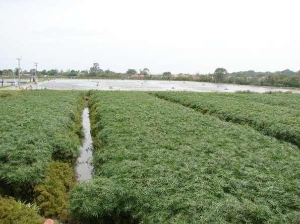 , Soluciones Ecológicas para el Tratamiento de Aguas Residuales